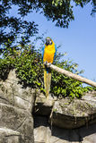 Arara. Shoot of a parrot in a zoo Stock Photography