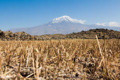 Ararat στην Τουρκία Στοκ Εικόνες