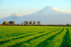 Ararat. Mountain view from Armenia Stock Image