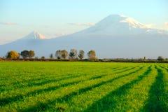 Ararat Stock Image