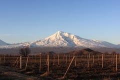 Ararat atrás da terra arável Fotografia de Stock