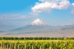 Ararat mountain and field Stock Photography