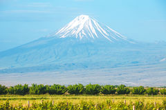 Ararat mountain and field Royalty Free Stock Photography