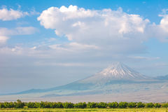 Ararat mountain and field Stock Photo