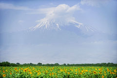 Ararat mountain in summer. Summer landscape with Ararat mountain and a sunflower field in foreground seen from Armenia royalty free stock photo
