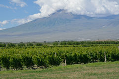 Ararat mountain and vineyard. Ararat in the clouds and the vineyard Royalty Free Stock Photo