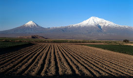 Ararat valley. Ararat mountain on blue sky with valley on foregraound Stock Images