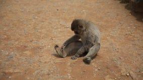 Arashiyama京都猴子 股票视频