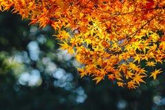 Arashiyama是秋天季节11月下旬和五颜六色的叶子这样 免版税库存照片