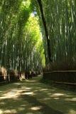 Arashiyama竹子森林 库存照片