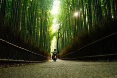 Arashiyama竹子 库存图片