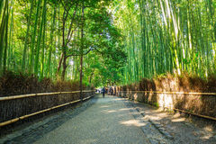 Arashiyama竹森林  免版税库存照片