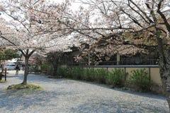 Arashiyama την άνοιξη Στοκ Φωτογραφίες