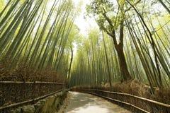 Arashiyama стоковые изображения rf