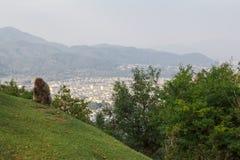 Arashiyama-Affepark, Kyoto, Japan Lizenzfreie Stockfotos