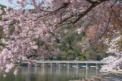 Arashiyama au printemps Images libres de droits