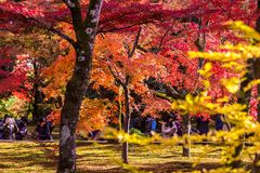 Arashiyama is Autumn season late november and colorful Leaf such. Arashiyama is a district on the western outskirts of Kyoto, Japan. It also refers to the Royalty Free Stock Images