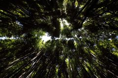 Arashiyama bamboo forest background, Kyoto, Japan.  Stock Photos
