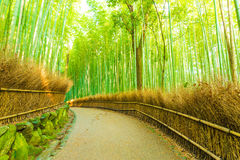 Arashiyama Bamboo Forest Curved Footpath Nobody H. Empty gently curving footpath road lined with hay fence and high bamboo trees in the early morning  in Stock Images