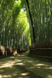 Arashiyama bamboo forest Stock Photos