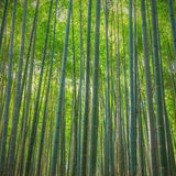 Arashiyama bamboo forest, Japan Stock Photography