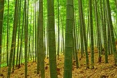 Arashiyama Bamboo Forest Kyoto royalty free stock photography