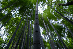 Arashiyama bamboo forest. In Kyoto Royalty Free Stock Photography