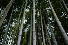 Arashiyama bamboo forest. In Kyoto Royalty Free Stock Photo