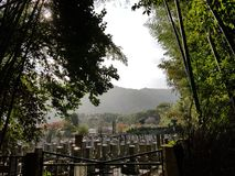 Arashiyama. Bamboo forest in kyoto japan Royalty Free Stock Images