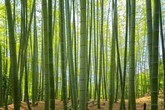 Arashiyama bamboo forest Royalty Free Stock Photo
