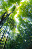 Arashiyama Bamboo Forest. In  Kyoto Japan Stock Images