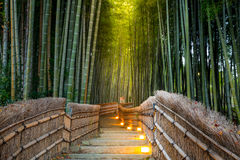 Arashiyama Bamboo Forest. In  Kyoto Japan Stock Photography