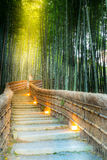 Arashiyama Bamboo Forest. In  Kyoto Japan Royalty Free Stock Photography