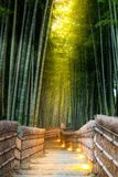 Arashiyama Bamboo Forest. In  Kyoto Japan Royalty Free Stock Image