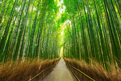 Arashiyama bamboo forest in Kyoto. Japan Royalty Free Stock Photos