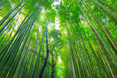 Arashiyama bamboo forest in Kyoto. Japan Stock Photography