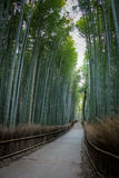 Arashiyama Bamboo Forest - Kyoto, Japan. Arashiyama Bamboo Forest in Kyoto, Japan Royalty Free Stock Photos