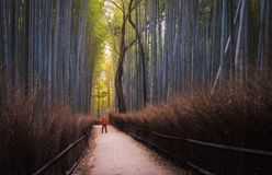 Arashiyama Bamboo Forest  Kyoto, Japan. Arashiyama Bamboo Forest and me taking a selfie travel photo Royalty Free Stock Images