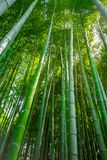 Arashiyama bamboo forest, Kyoto, Japan. Arashiyama bamboo forest in Sagano, Kyoto, Japan Stock Photos