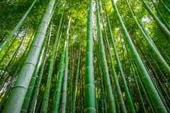Arashiyama bamboo forest, Kyoto, Japan. Arashiyama bamboo forest in Sagano, Kyoto, Japan Royalty Free Stock Images
