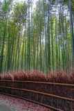 Arashiyama bamboo forest, Kyoto, Japan. Arashiyama bamboo forest in Sagano, Kyoto, Japan Royalty Free Stock Photography