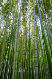 Arashiyama bamboo forest, Kyoto, Japan. Arashiyama bamboo forest in Sagano, Kyoto, Japan Stock Photography