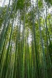 Arashiyama bamboo forest, Kyoto, Japan. Arashiyama bamboo forest in Sagano, Kyoto, Japan Stock Images