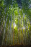Arashiyama bamboo forest Kyoto. Japan. Arashiyama is a beautiful tourist destination west of the city of Kyoto, especially known for its bamboo forest royalty free stock photo
