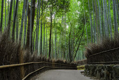 Arashiyama bamboo forest in Kyoto, Japan. Green bamboo forest at Arashiyama touristy district, Kyoto prefecture in Japan Stock Photography