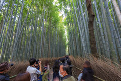 Arashiyama Bamboo forest. KYOTO, JAPAN - Nov 03:  The Arashiyama Bamboo forest on Nov 03, 2015 in Arashiyama, Kyoto, Japan. Arashiyama is well known as a pure Stock Photo