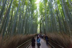 Arashiyama Bamboo forest. KYOTO, JAPAN - Nov 03:  The Arashiyama Bamboo forest on Nov 03, 2015 in Arashiyama, Kyoto, Japan. Arashiyama is well known as a pure Royalty Free Stock Photo