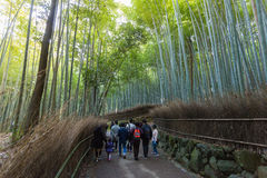 Arashiyama Bamboo forest. KYOTO, JAPAN - Nov 03:  The Arashiyama Bamboo forest on Nov 03, 2015 in Arashiyama, Kyoto, Japan. Arashiyama is well known as a pure Royalty Free Stock Photos