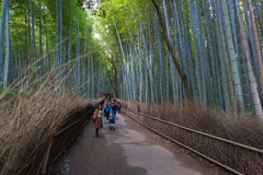 Arashiyama Bamboo forest. KYOTO, JAPAN - Nov 03:  The Arashiyama Bamboo forest on Nov 03, 2015 in Arashiyama, Kyoto, Japan. Arashiyama is well known as a pure Royalty Free Stock Image