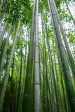 Arashiyama bamboo forest, Kyoto, Japan. Arashiyama bamboo forest in Sagano, Kyoto, Japan Royalty Free Stock Photos